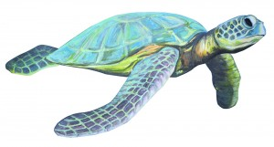havskildpadde ns